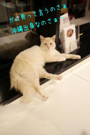 ガム男20110520-2