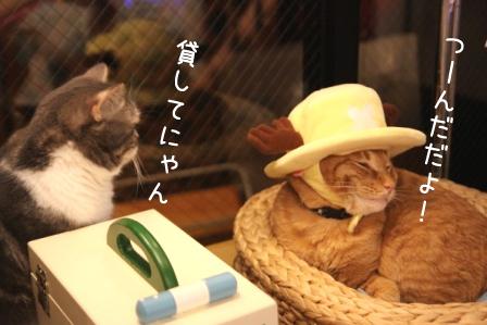 ちゃんぷ20110717
