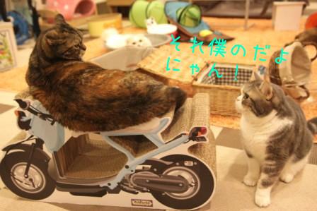 いちご20110904
