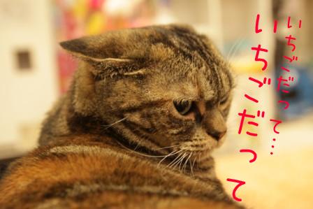 いちご20110904-4