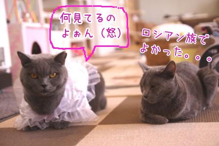 ぶり20110927
