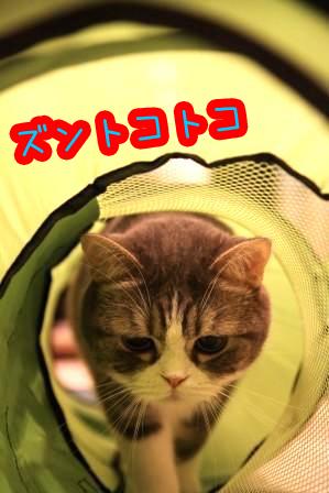 マール20111022-5