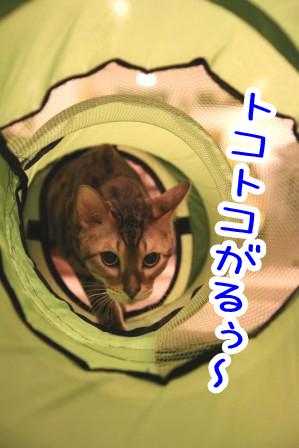 虎徹20111024-2