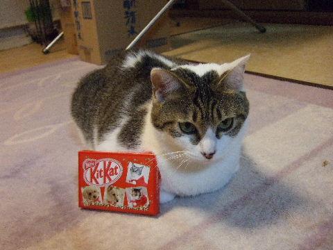 2009_1222もうすぐクリスマス♪0012