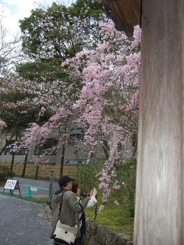 2010_0412京都Cの旅0047