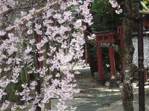 2010_0412京都Cの旅0026
