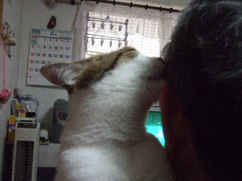 2010_0629トマちゃんです0003
