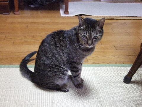 2011_0703あおいくま0075
