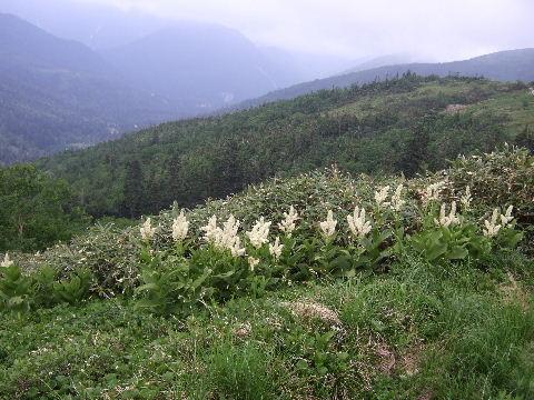 2011_0726薬師岳0045