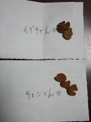 2011_0831蝶ヶ岳0167