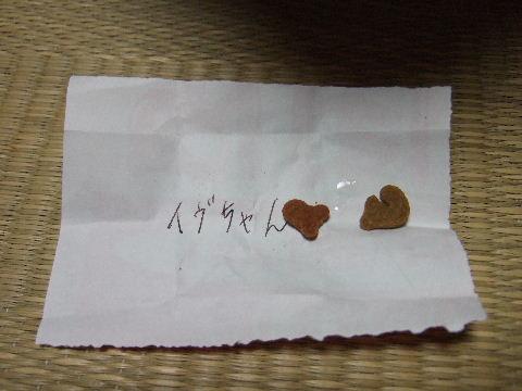 2011_0831蝶ヶ岳0172