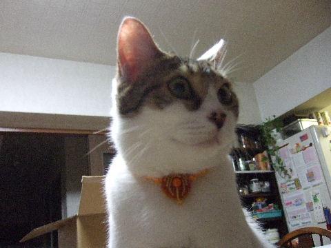 2011_0929来る福招き猫まつりin0041