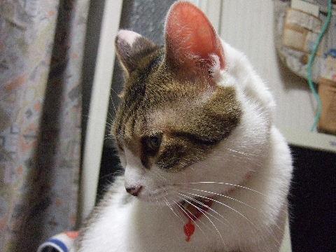 2011_0929来る福招き猫まつりin0038