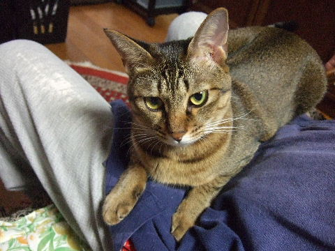 2011_1010来る福招き猫まつりin0077