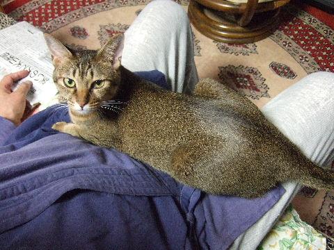 2011_1010来る福招き猫まつりin0076