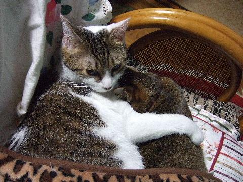 2011_1010来る福招き猫まつりin0140