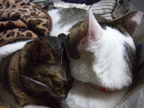 2011_1010来る福招き猫まつりin0135