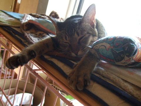 2011_0929来る福招き猫まつりin0002