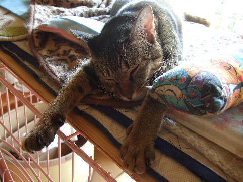 2011_0929来る福招き猫まつりin0001
