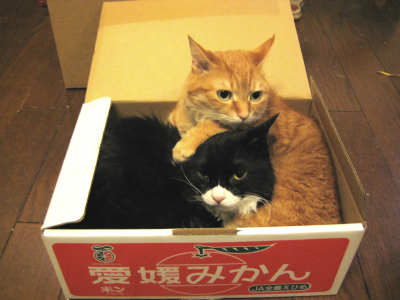 しのかのみかん箱2