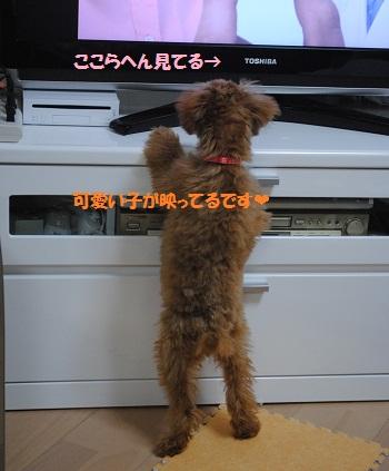 DSC_tv.jpg