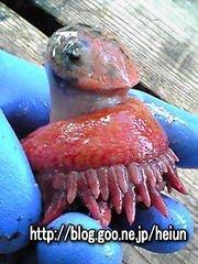 謎の深海生物
