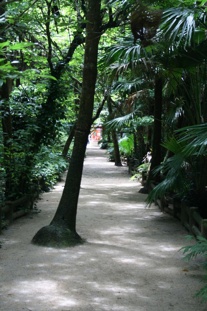 090810ジャングル
