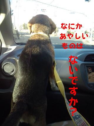 20110110151153_1.jpg