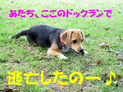 IMG_2463_1.jpg