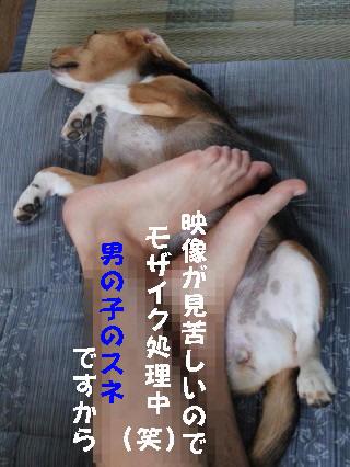 IMG_2479_1.jpg