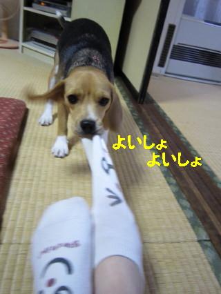 IMG_2665_11.jpg