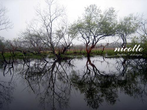 2010gwc_ks3.jpg