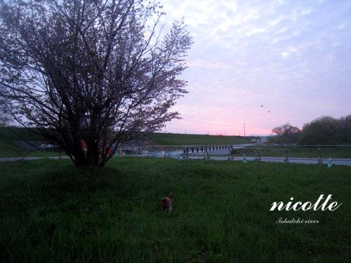 2010gwc_t2.jpg