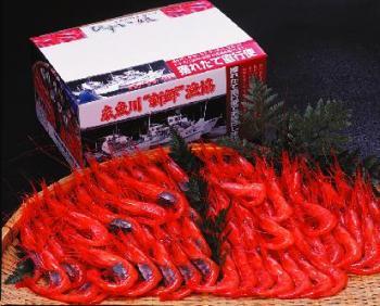 糸魚川産南蛮エビ
