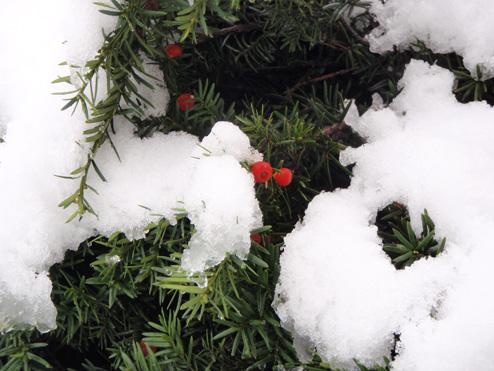 画像趣味初雪 ブログ1