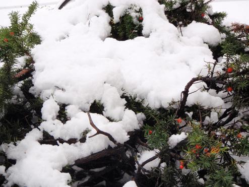 画像趣味初雪 ブログ2