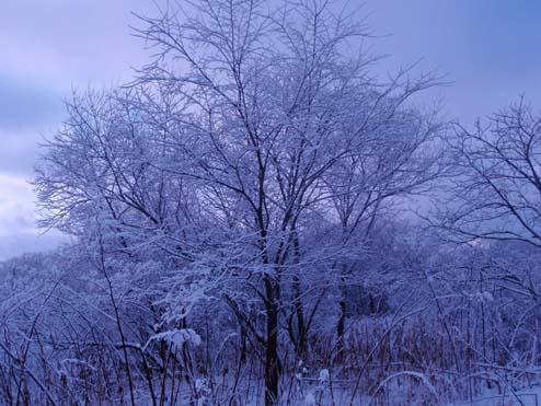 画像趣味冬天塩川 ブログ1