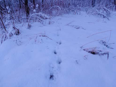 画像趣味冬天塩川 ブログ2