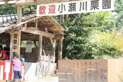2009.09.13 栗拾い 023