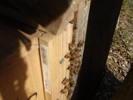 巣箱とハチ<br />(冬)P1140056