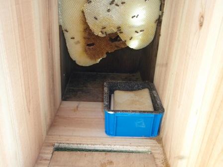 巣箱と給餌機P1140059