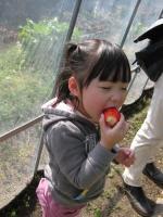 ichigo3-20110305.jpg