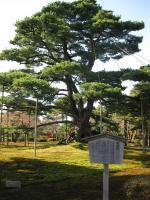 kenroku-5.jpg