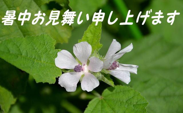 syotyu1.jpg