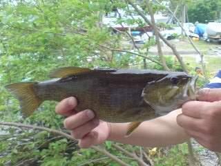 20110605 桟橋で釣れた AO