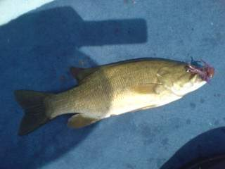 20110720 Chuジグで釣れた