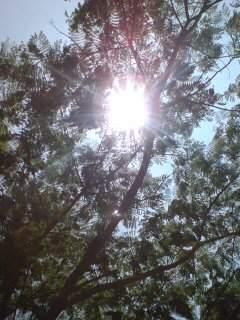 20110803 木漏れ日2