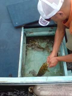 20110903 今日も大漁