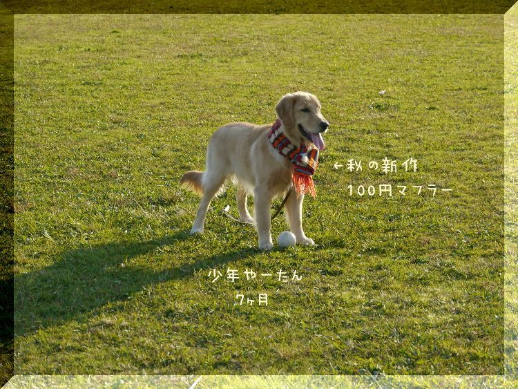 P1070323.jpg