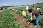 2010・09・19芋掘り4